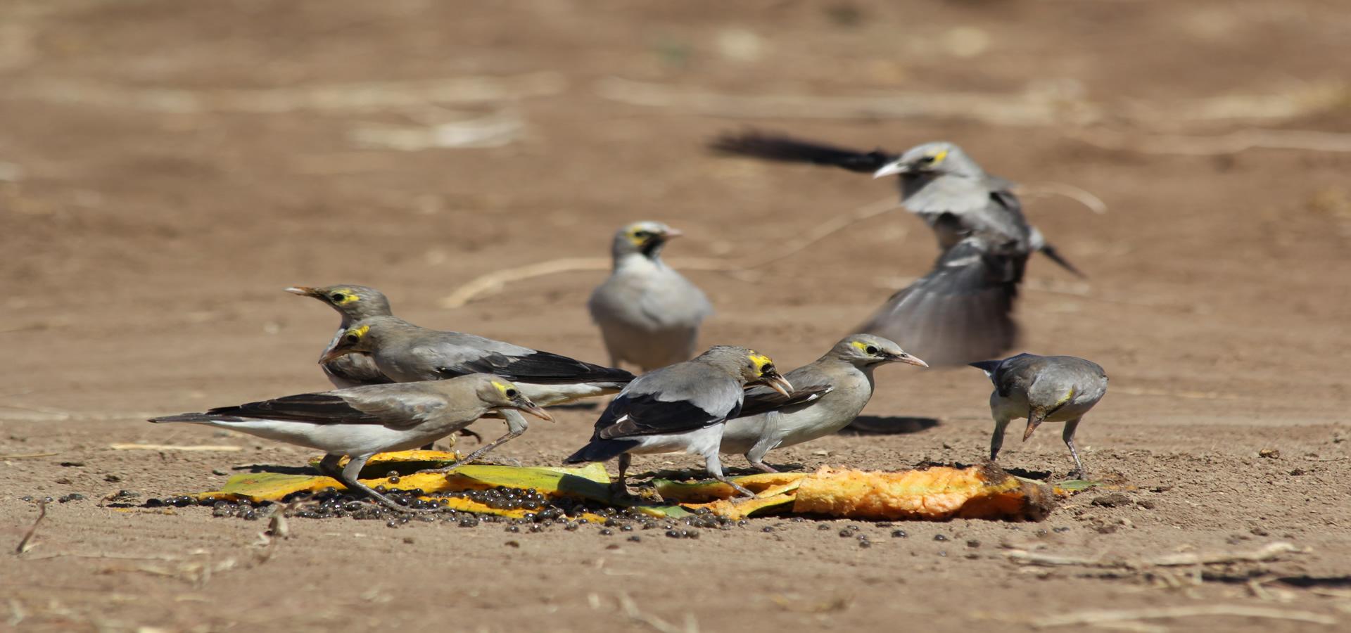 Bird working group